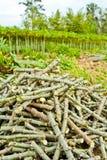 Stapel van het knipsel van de maniokboomstam royalty-vrije stock fotografie