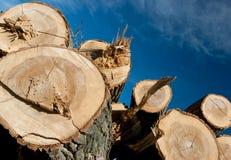 Stapel van hout royalty-vrije stock foto