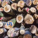 Stapel van hout in bos Royalty-vrije Stock Foto
