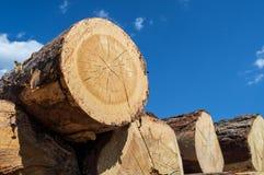 Stapel van hout op blauwe hemelachtergrond Stock Afbeelding