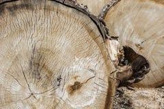 Stapel van houten logboeken Selectieve nadruk Stock Foto
