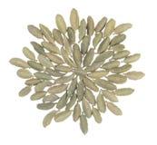 Stapel van kardemom in vorm van een bloem Royalty-vrije Stock Foto's