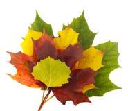 Stapel van kleurrijke bladeren stock foto's