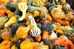 Stapel van Kleurrijke Dalingspompoenen Stock Afbeelding