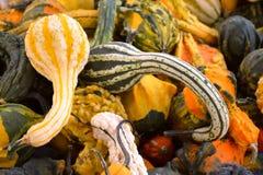 Stapel van Kleurrijke Dalingspompoenen Stock Foto