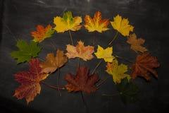 Stapel van kleurrijke de herfstbladeren Stock Foto