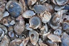 Stapel van kleurrijke shells Stock Afbeeldingen