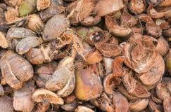 Stapel van kokosnoten Stock Foto