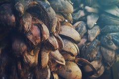 stapel van kokosnotenschil Royalty-vrije Stock Afbeeldingen