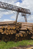 Stapel van larchs Siberiër Stock Foto's