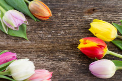 Stapel van multicolored tulpen Stock Foto's