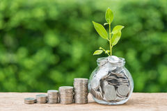 Stapel van muntstukken en kruik met hoogtepunt van muntstukken met pla van de de groeispruit Stock Foto's