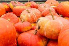 Stapel van oogst oranje pompoenen stock foto