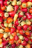 Stapel van organische paprika Royalty-vrije Stock Afbeeldingen