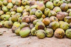 Stapel van oude kokosnoten ter plaatse, Thailand Stock Foto's