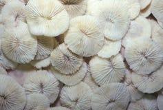 Stapel van Overzeese Shells, Voet Myers, Florida Stock Foto