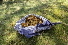 Stapel van paddestoelen in een blauwe sjaal in het gras, Suillus-grevillei eetbare bospaddestoel Royalty-vrije Stock Afbeelding