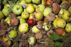 Stapel van rotte appelen royalty-vrije stock afbeelding