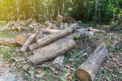 Stapel van rubber houten logboek in Phatthalung royalty-vrije stock foto