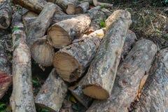 Stapel van rubber houten logboek in Phatthalung royalty-vrije stock fotografie