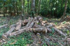 Stapel van rubber houten logboek in Phatthalung stock afbeelding