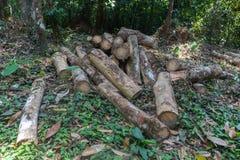 Stapel van rubber houten logboek in Phatthalung stock foto's