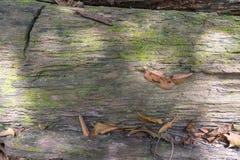 Stapel van rubber houten logboek in Phatthalung royalty-vrije stock afbeeldingen