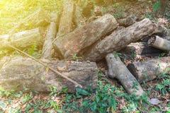 Stapel van rubber houten logboek in Phatthalung stock afbeeldingen