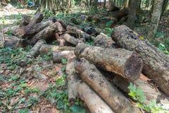 Stapel van rubber houten logboek in Phatthalung royalty-vrije stock afbeelding