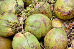 Kokosnoot met ruwe dekking Royalty-vrije Stock Foto's