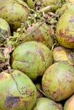 Kokosnoot met ruwe dekking Stock Fotografie