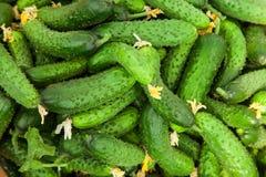 Stapel van verse groene komkommer Stock Afbeeldingen