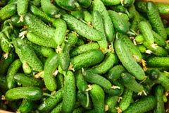 Stapel van verse groene komkommer Stock Foto
