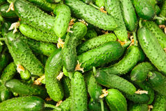 Stapel van verse groene komkommer Royalty-vrije Stock Afbeelding