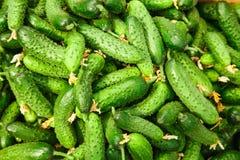 Stapel van verse groene komkommer Royalty-vrije Stock Foto's