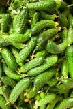 Stapel van verse groene komkommer Royalty-vrije Stock Afbeeldingen