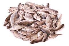 Stapel van verse vissen Royalty-vrije Stock Afbeeldingen