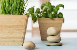 Stapel van vlotte stenen en wheatgrass installatie in bamboeplanter Stock Fotografie
