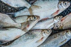 Stapel van zoetwater gemeenschappelijke brasemvissen en zilveren brasem of witte B stock foto