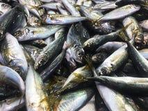 Stapel verse vissen stock afbeelding