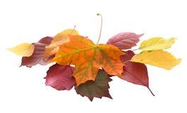 Stapel von bunten Herbst- und Fallblättern Lizenzfreies Stockbild