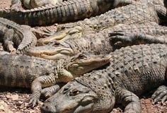 Stapel von Crocs Lizenzfreies Stockfoto