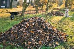 Stapel von gefallenen Blättern in einem Yard lizenzfreies stockfoto