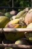Stapel von grünen Kokosnüssen Lizenzfreie Stockfotos