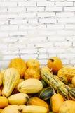 Stapel von Kürbisen über weißem Ziegelsteinhintergrund lizenzfreies stockfoto