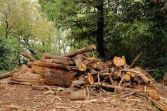 Stapel von Klotz Waldindustrie und Rohstoff des Baus Lizenzfreie Stockfotos