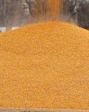 Stapel von Mais mit dem noch fallenden Mais Lizenzfreie Stockfotografie