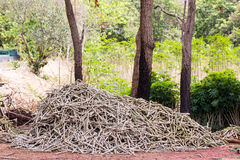 Stapel von Maniokabäumen auf Hintergrund Lizenzfreies Stockfoto