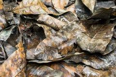 Stapel von nassen Blättern häufen aus den Grund stockfotografie