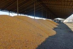 Stapel von organischen reifen Maissamen am Getreidespeicher stockfotografie